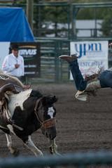 Tak_CPRA_2016-5082 (takahashi.blair) Tags: coachtak rodeo blairtakahashitakahashiblaircoachtakblairtakahashi pincher creek barrel racing bronc rope bareback steer bullriding
