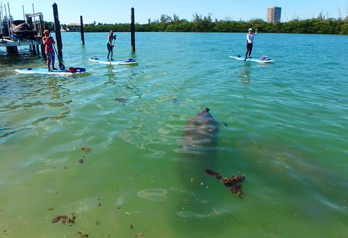 5-1-15-Paddleboard-Yoga-Teacher-Training-Sarasota-FL 39