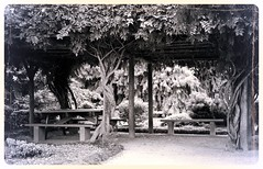 A cool place to sit (Deb Jones1) Tags: park travel trees bw green monochrome beauty canon garden botanical flora australia places vista flickrduel debjones1