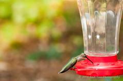 Hummingbird (AndiVanPhotog) Tags: nature feeding hummingbird atlanta tamron georgia nikon streetphotography