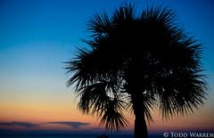 Hilton Head Island - Palm Tree (theblackpearl2007) Tags: ocean sunset sky beach island head hilton palm