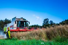 Lexion (Fotos aus OWL) Tags: raps mhdrescher claas lexion ernte landwirtschaft dreschen