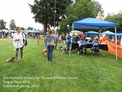 DAT2016_Crowd_EventRing_1072 (greytoes_99) Tags: agility dat2015 dat2016 event humanesocietytacoma people summer tacoma tacomahs volunteers dog humananimalbond cat lakewood wa us
