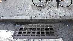 (Strange Land) Tags: newyorkcity rat manhattan unionsquare