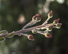 El hilo (Micheo) Tags: macro thread dof hilo fragile fragilidad boked frgiles