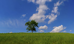 Summer afternoon (static_dynamic) Tags: blue summer sky usa cloud tree green nature field grass landscape nikon afternoon outdoor pennsylvania meadow july leisure floatingclouds nikond3100