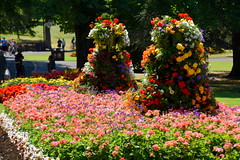 In Full Blossom (Manoo Mistry) Tags: plants flowers nature nikond5500body tamron18270mmzoom park canonhillpark birmingham