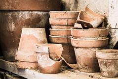Gardener's Shed Flowerpots (Peter Greenway) Tags: hidcote flowerpots nt shelf flowerpot nationaltrust meadowflowers terrocota macro flowers hidcotegardens meadow gloucestershire england