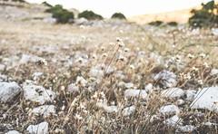 (ioannabo) Tags: love nikon natural greece parnitha nikon5300