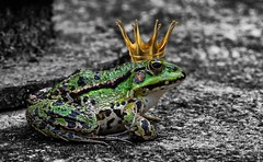 Kiss me..... (Maxum1201) Tags: frosch froschknig frog king frogking grn sommer teich sea lake water krone crown