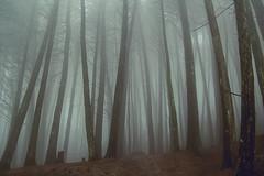 Neblina (oscar pinto fotografa) Tags: bosque neblina fotos verde invierno lluvia paisaje tranquilidad tranquility relaxing relajante fog forest