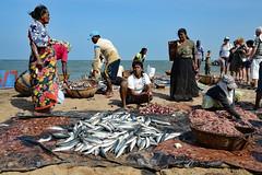 DSC_0552 (Tartarin2009) Tags: tartarin2009 srilanka negombo fishmarket beach seaside nikon d600 people travel
