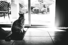 Patience (b. ellabarger) Tags: patience gilbert gilbertaz arizona window door windows backyard tile cat animal pet pets silhouette silhouettes vignette lines lineslineslines blownouthighlights highlights blackwhite blackandwhite blackandwhitedrama bw bandw chair framing brilliant brilliantlight beautiful beautifullight beauty thelightfantastic