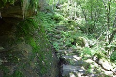 DSC_0111web (pedrop61) Tags: country mountains nature walking trekking roman valledaosta canavese boschi wood lake animali