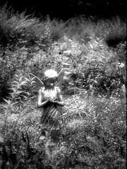 MZ3 Test Roll Image #3 (JourneysEnd1750) Tags: svema yashica film analog blackandwhite bw rural garden gardening woodland woods mz3 35mmfilm tlelectrox filmphotographyprojectcom