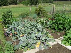 My garden (XI) (dididumm) Tags: harvesttime summer garden vegetables flowers growing wachsen blumen gemse sommer ernte erntezeit