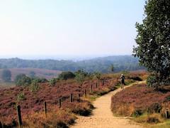 The Hiker (CosmoClick) Tags: posbank hiking hike moors cosmoclicky landscape purple moorland heath heather heide rheden wow