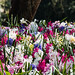 """2015_Floralia_Brussels-60 • <a style=""""font-size:0.8em;"""" href=""""http://www.flickr.com/photos/100070713@N08/17209260484/"""" target=""""_blank"""">View on Flickr</a>"""