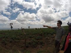 Cookswell Jikos Forestry and BBQ Division May Safaris! (Cookswell Jikos) Tags: coffee baking energy kenya nairobi bbq goose safari charcoal firewood treeplanting biomass mtkenya cookstove thika ruiru biomassenergy kenyancooking jikos cookswelljikos reaforestation housheold