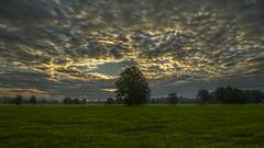 The Beginning Of A New Day (Erich Hochstöger) Tags: morning trees tree clouds landscape lumix austria österreich wolken panasonic landschaft bäume morgen baum niederösterreich hdr morgens loweraustria mostviertel morgenstimmung morningmood fz150