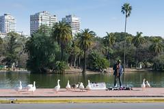 La pandilla (Osky Walk) Tags: park palermo buenos aires argentina ducks gansos patos color colour person persona venta callejera street parque lago lake lagos lakes