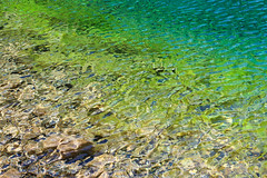 Grassi Lakes - Canmore, Alberta (The Web Ninja) Tags: travel mountain lake canada mountains color colour green water canon photography photo crystal explorer lakes rocky canadian glacier clear explore photograph alberta banff colourful traveling canmore traveler grassy grassi albertan 70d explored canon70d