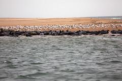 Newburgh beach (tommyajohansson) Tags: greatbritain beach geotagged scotland aberdeenshire unitedkingdom aberdeen seal seals newburgh weekendbreak faved slar citybreak sl newburghbeach tommyajohansson