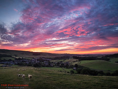 Abbotsbury Sunrise (TDR Photographic) Tags: dorset england stcatherineschapel thedorsetrambler uk abbotsbury landscape light possibles sheep sunrise walking