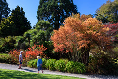 Out for a Stroll (Jocey K) Tags: flowers trees newzealand christchurch sky people spring shadows azalea pathway ilamgardens