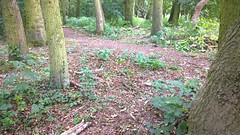 ...and after. (ulle.b) Tags: himalayanbalsam knavesmirewood york
