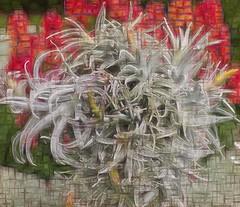 stranger (duncan!) Tags: leica m240p 90mm f40 ltm 1938 air plants strange stranger abstract extreme wisley rhs gardens crystal world