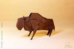 Fumiaki Kawahata - Bison (IverRu) Tags: animal bison iver kawahata