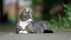 Regal (mikeyatswb) Tags: cat kitty