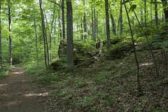BTV_Geo-338 (placeuvm) Tags: place burlingtongeographic ethanallenpark forest rocks