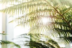Untitled (Chang Tai Jyun) Tags: uk england green london nature garden gb skygarden   vsco
