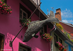 something's fishy here (greg luengen) Tags: lindau bavaria bayern architecture citycenter pink colorful fish sony sonyalpha