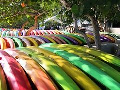 Colorful Kayaks (MyFWCmedia) Tags: kayak kayaks fwc myfwc myfwccom wildlife florida floridafishandwildlife conservation johnpennekamp keylargo flkeys floridakeys floridastateparks johnpennekampcoralreefstatepark park pennekamp lovefl