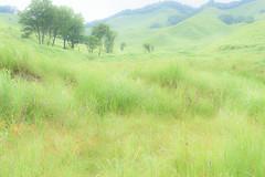 7Tonomine Highland (anglo10) Tags:   japan   field