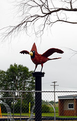 Cardinal mascot at Medina Public School, Medina, North Dakota (Blake Gumprecht) Tags: stutsmancounty northdakota cardinal mascot medinapublicschool