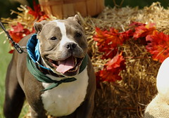 Dog Admission Day, Morton Arboretum. 1 (EOS) (Mega-Magpie) Tags: canon eos 60d outdoors dog puppy the morton arboretum lisle dupage il illinois usa america