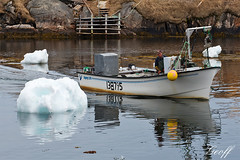 Lobster Fisherman (gwhiteway) Tags: ocean travel fish canada man tourism ice water newfoundland boat fisherman pond north atlantic greens lobster iceberg nl bit nfld