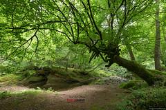 Ucieda #003 (Jose M. Peral) Tags: españa naturaleza verde primavera luz rio horizontal hojas agua europa exterior diagonal bosque árbol montaña cantabria ramas fuerte húmedo frondoso inclinado ucieda alairelibre