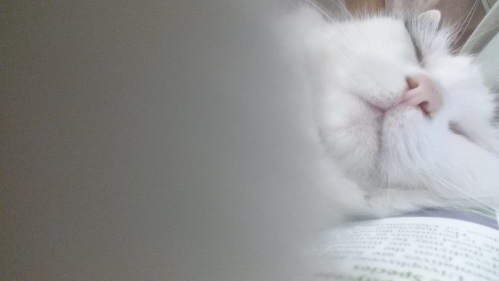 Squishy Nose Cat : The World s Best Photos of face and squish - Flickr Hive Mind