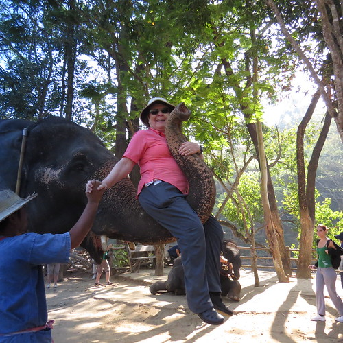 Elephants at Maetamann camp - Chiang Mai, Thailand