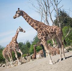 Dublin Zoo (C) 2015