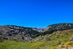 Tanourine Cedar Tree Forest, Lebanon (Paul Saad (( ON/OFF ))) Tags: sky lebanon mountains tree forest nikon cedars tannourine hadetheljebbe