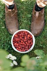 (Dbennison) Tags: summer fruit berry nikon bokeh katie 85mm d750 raspberry cranbrook raspberries