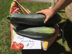 Huge Zucchini (artistwhite) Tags: park white green farmers market outdoor nj large vegetable huge asbury roger zucchini
