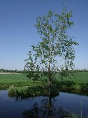 Fish pond, Mtyshalom, Hdmezvsrhely, Hungary (Norbert Bnhidi) Tags: hungary hdmezvsrhely mtyshalom lake pond plant ungarn hungra hongrie ungheria hungria hongarije  magyarorszg