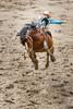 ajbaxter160717-0033 (Calgary Stampede Images) Tags: calgarystampede 2016 rodeo alberta canada ajbaxter allanbaxter